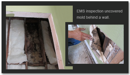 Orlando Area Mold Inspections