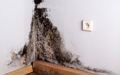 3 Things You Should Know Before Hiring Mold Remediation Services