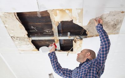 Taking A Look At The Importance And Benefits Of Testing For Mold In The Home