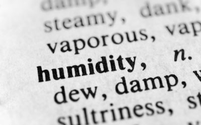 High Humidity: The Mold Source You Didn't Know About (And How To Fix It!)