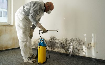 6 Things to Expect During the Mold Remediation Process