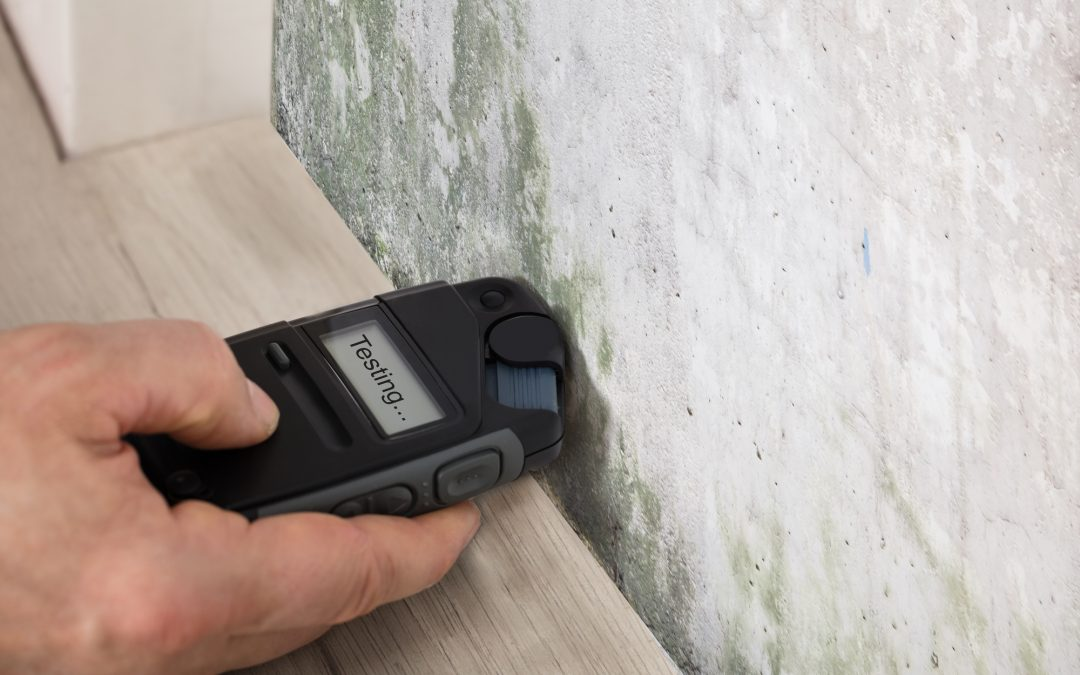 how do you test for mold